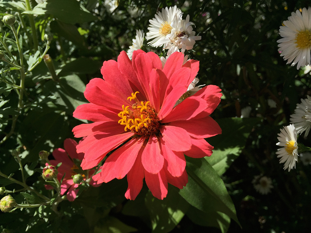 Flower photo from iPhone 6 camera