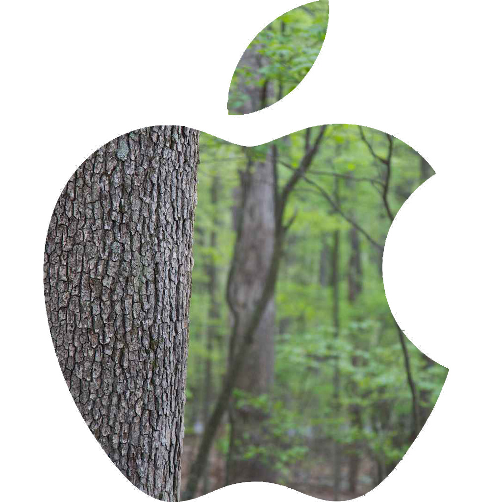 Apple working to save forests in China
