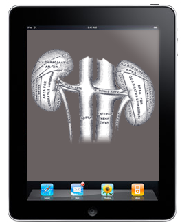 Trial over teen selling his kidney for an iPad undeway