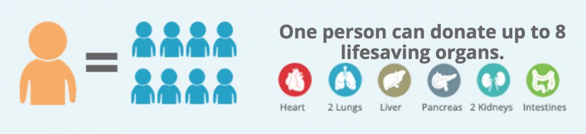 organ donor stats