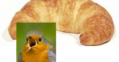 Twitter User birdsrightsactivist