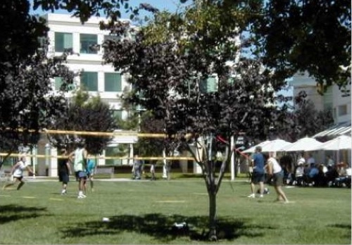 Volleyball in Infinite Loop courtyard.