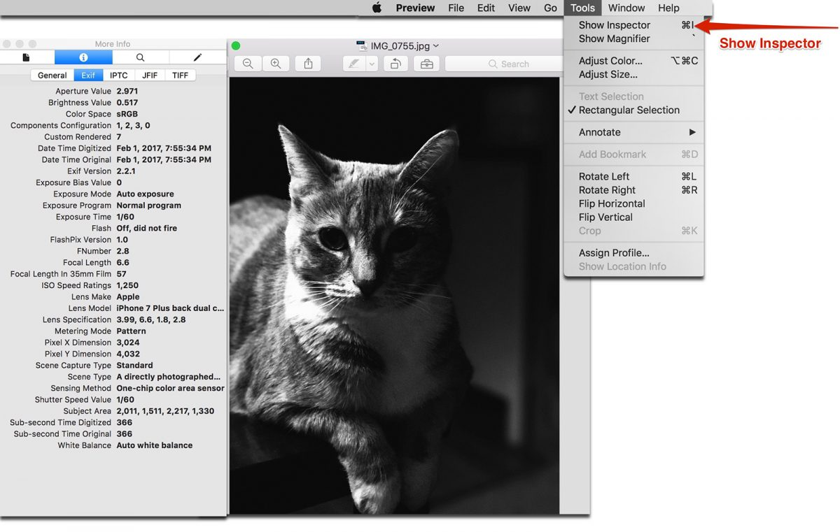 preview inspector photo metadata