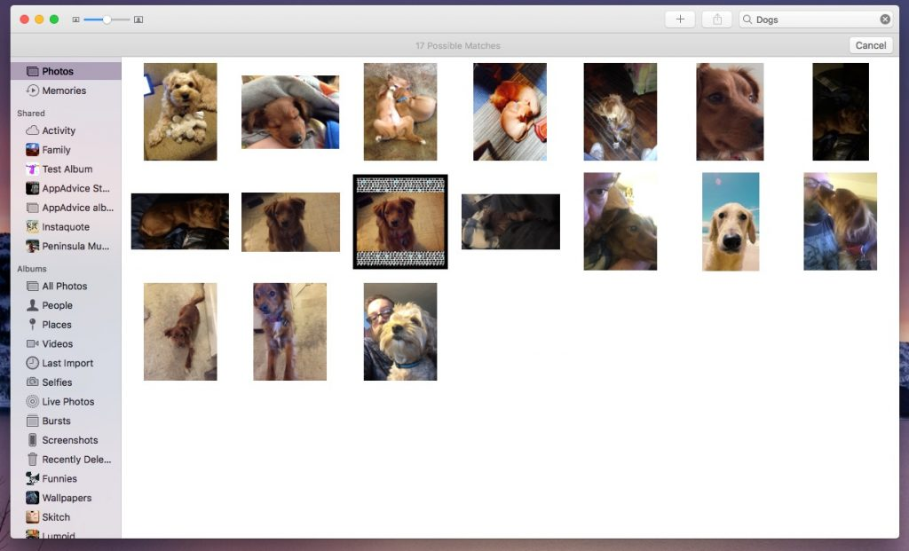 "The search results when I search Photos on macOS for ""Dog"""