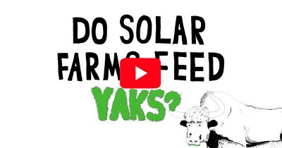 Do Solar Farms Feed Yaks?