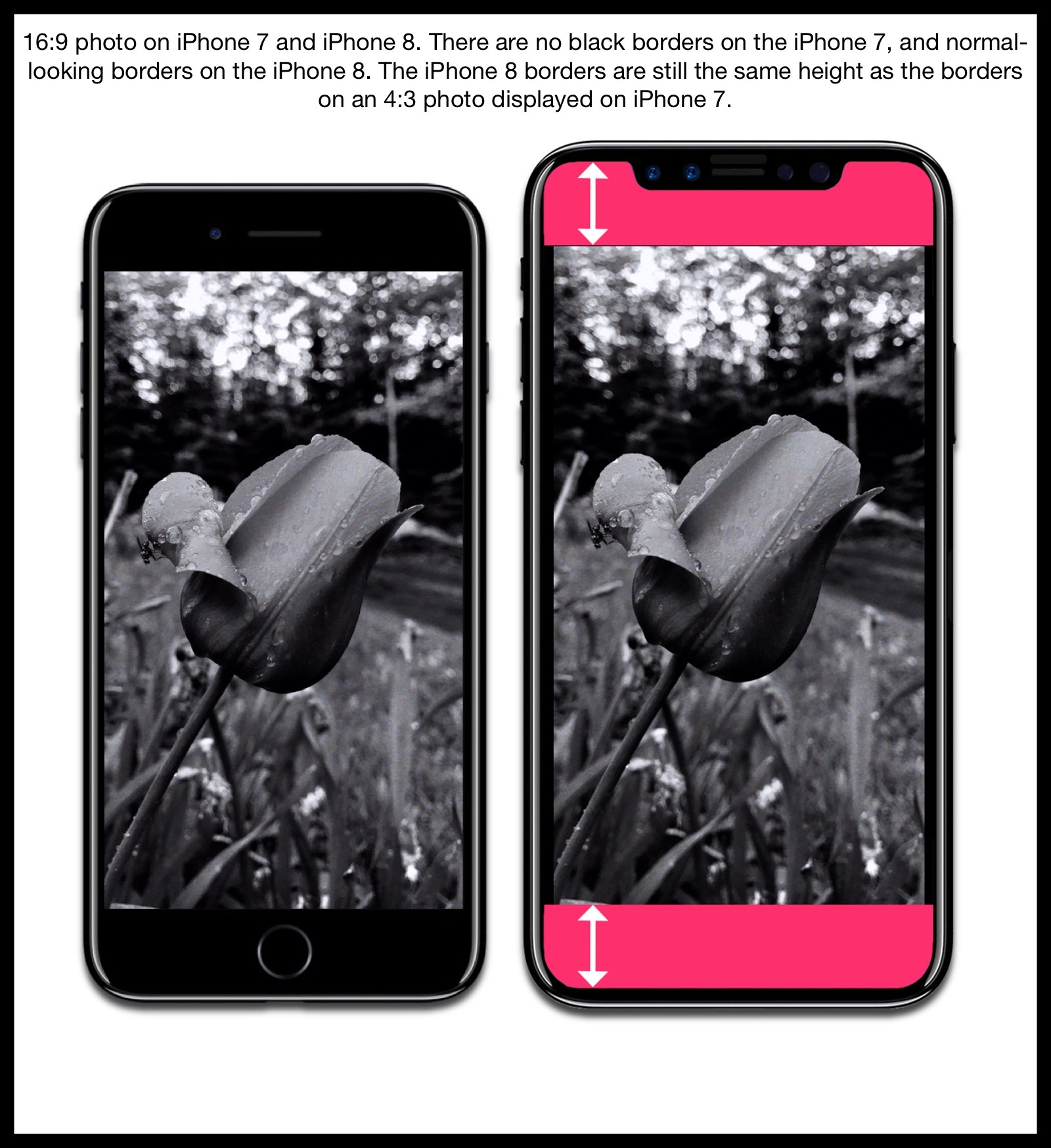 Image comparing how 16:9 aspect ratio photos are displayed on an iPhone 7 and iPhone 8 mockup.