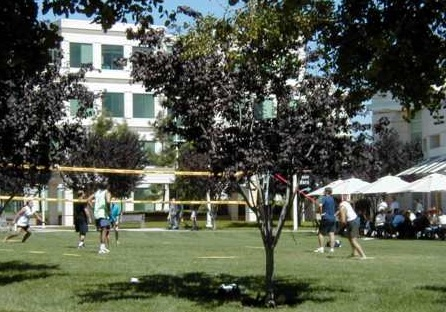 Apple Infinite Loop. Volleyball at lunch.