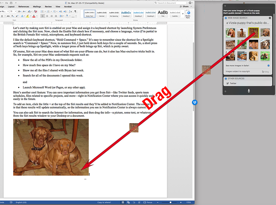 You can even drag a picture (or anything draggable) from your Siri results windoid into a document.
