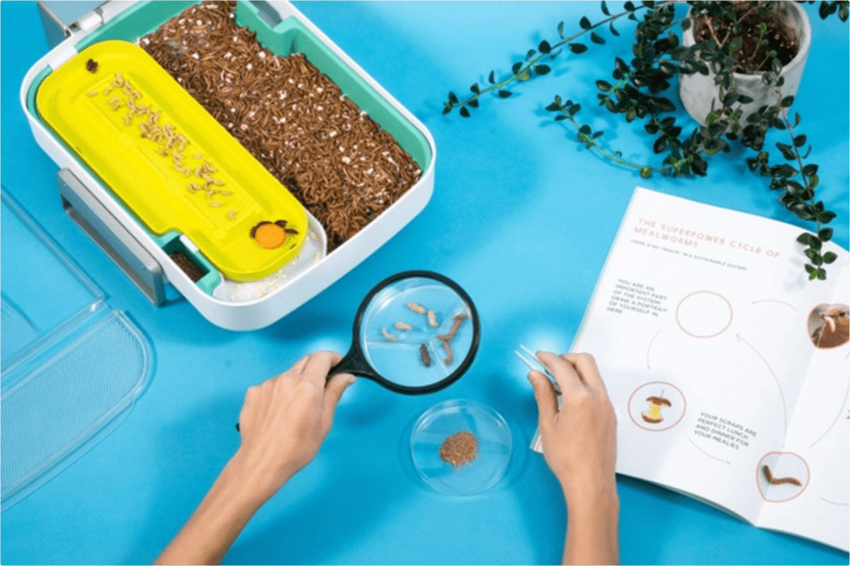 This Smart Insect Farm Acts as a Composter