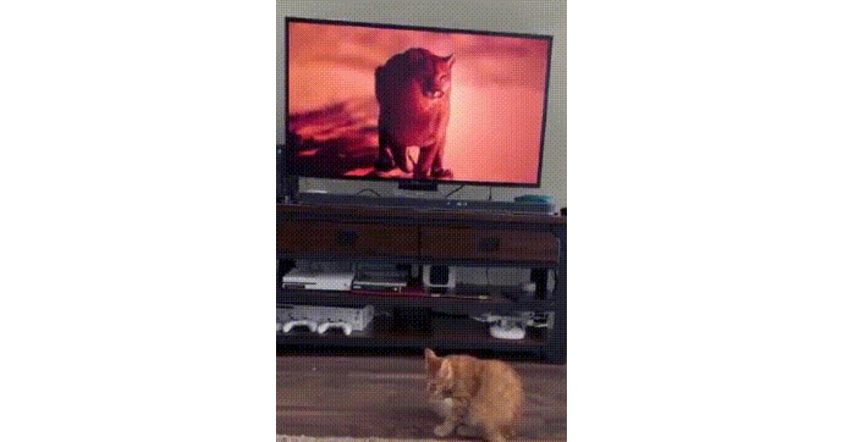 A New Way to Play With Your Cat: 4KTV