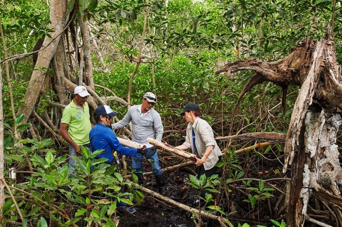 Four people in mangrove forest