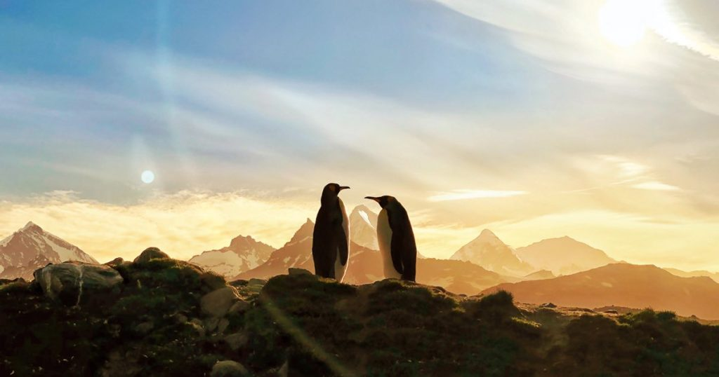 Penguins Earth Day