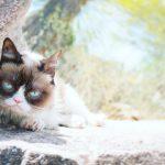 Grumpy Cat: Viral Sensation Dies Aged 7