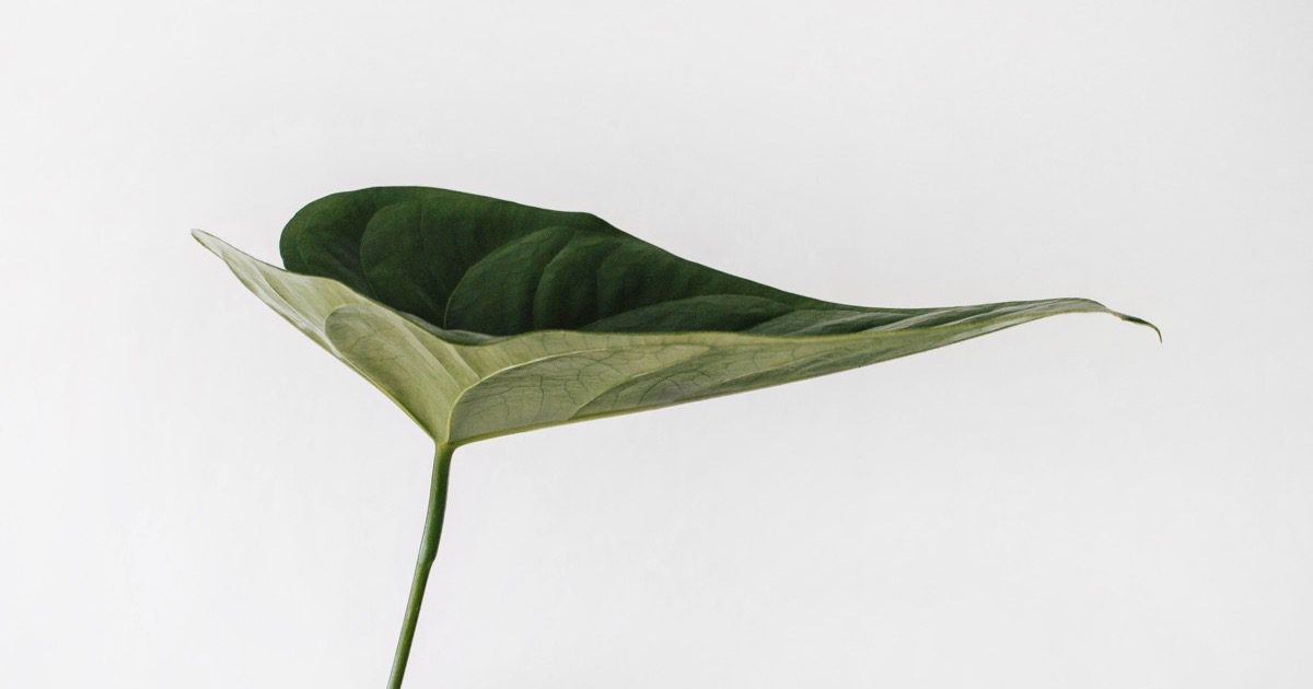 What if Plants Could Be Smart Home Devices?