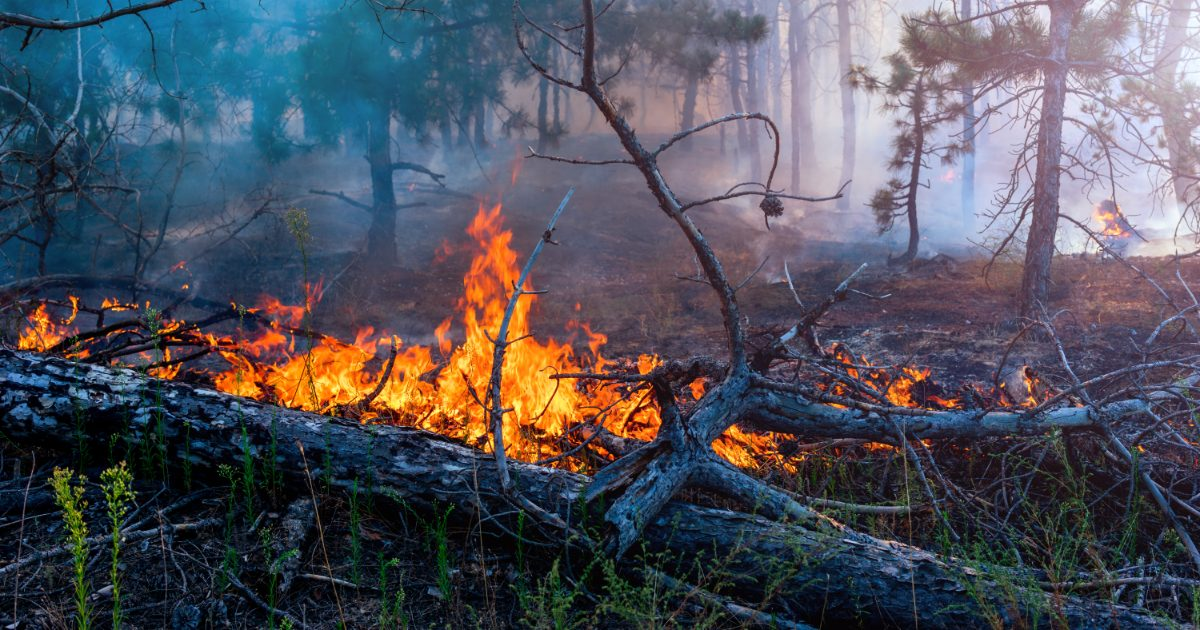This Real-Time Map Shows You the Amazon Forest Fires