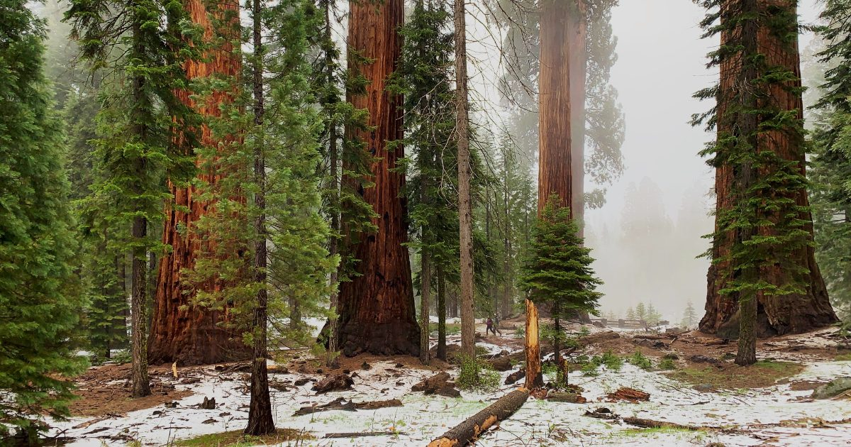 Donate to U.S. National Parks Using Apple Pay