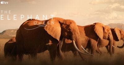 Apple TV+ The Elephant Queen.