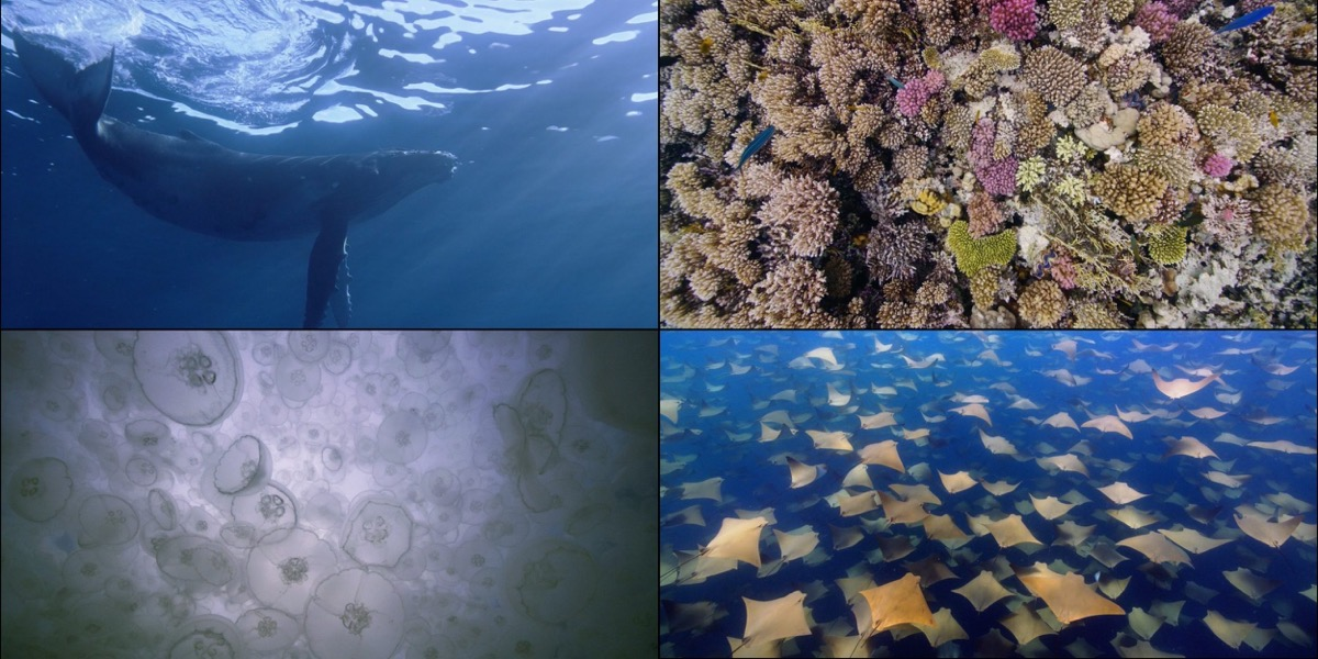 Four of the new Apple TV screensavers