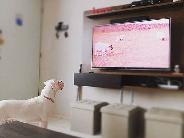 RelaxMyDog Video Streaming 2-Year Subscription: $39.99