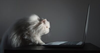 White cat looking at laptop screen
